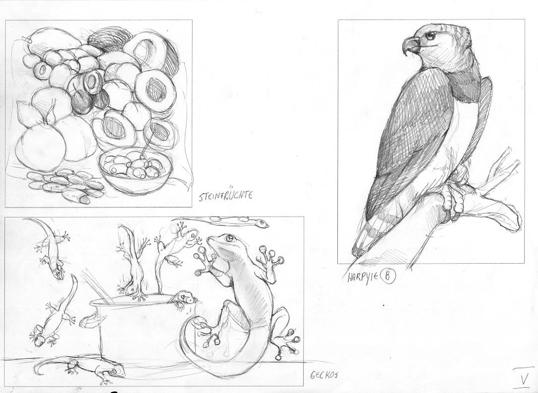 Illustrationen-Natur-5