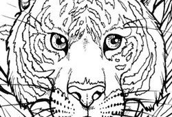 Coloring Book – Animals