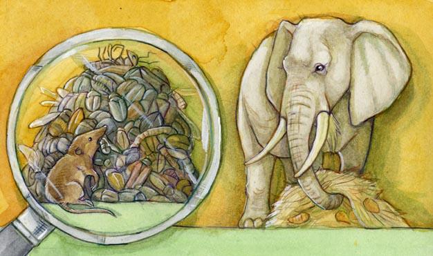 elefant-spitzmaus
