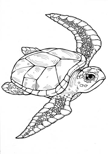 seaturtle including black coloring pages 1 on black coloring pages additionally black coloring pages 2 on black coloring pages further black coloring pages 3 on black coloring pages including black coloring pages 4 on black coloring pages