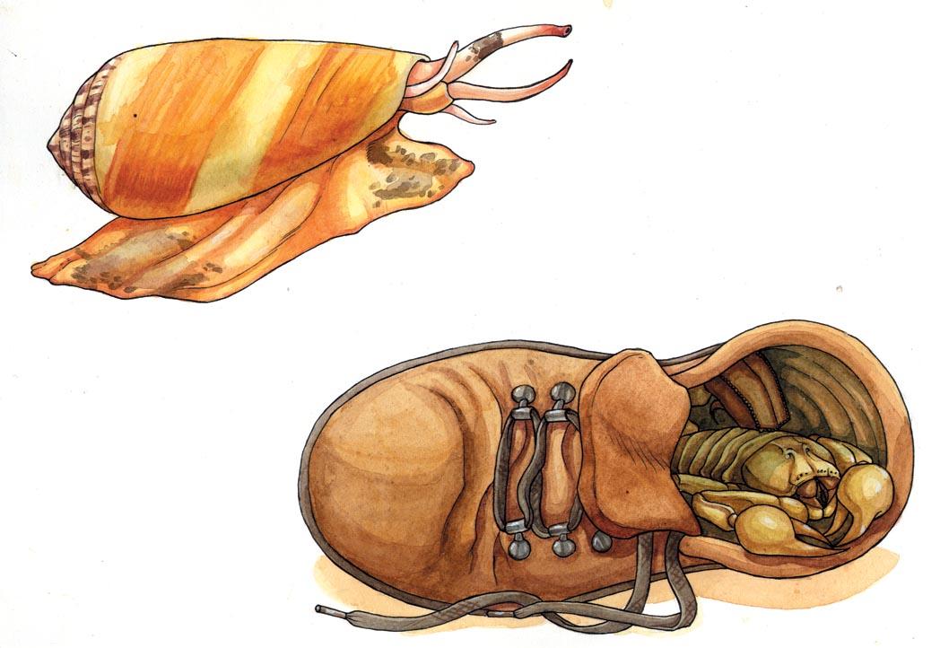 Conus-Skorpion