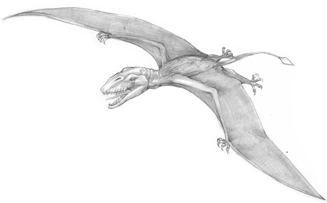 Dimorphodon-bw-final-web