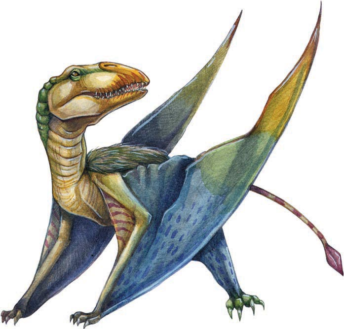 Dimorphodon-color-final-web