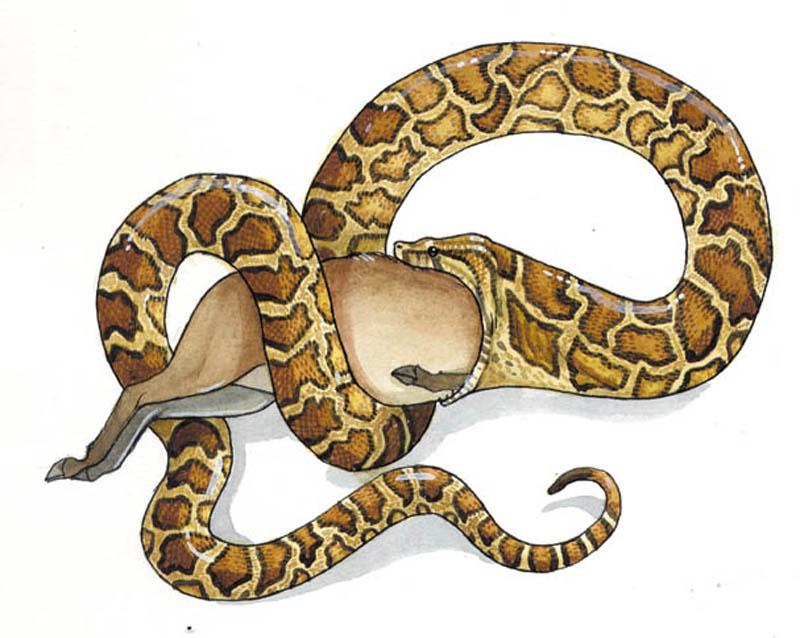 Python-1-web